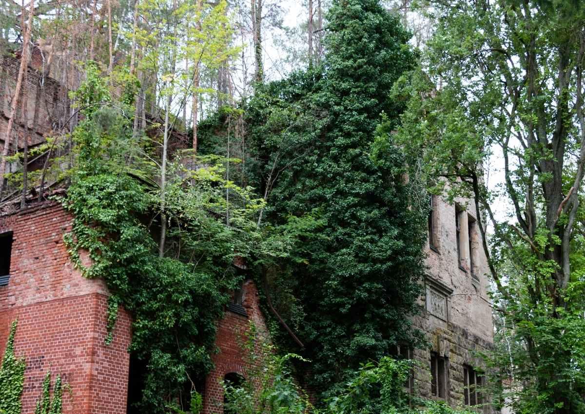 Heilstätten Beelitz - verwunschene Orte